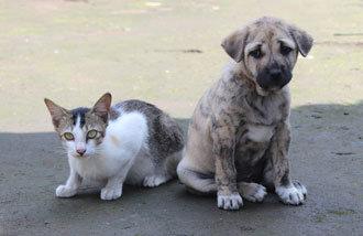 Heilen hundeallergie Tierhaarallergie